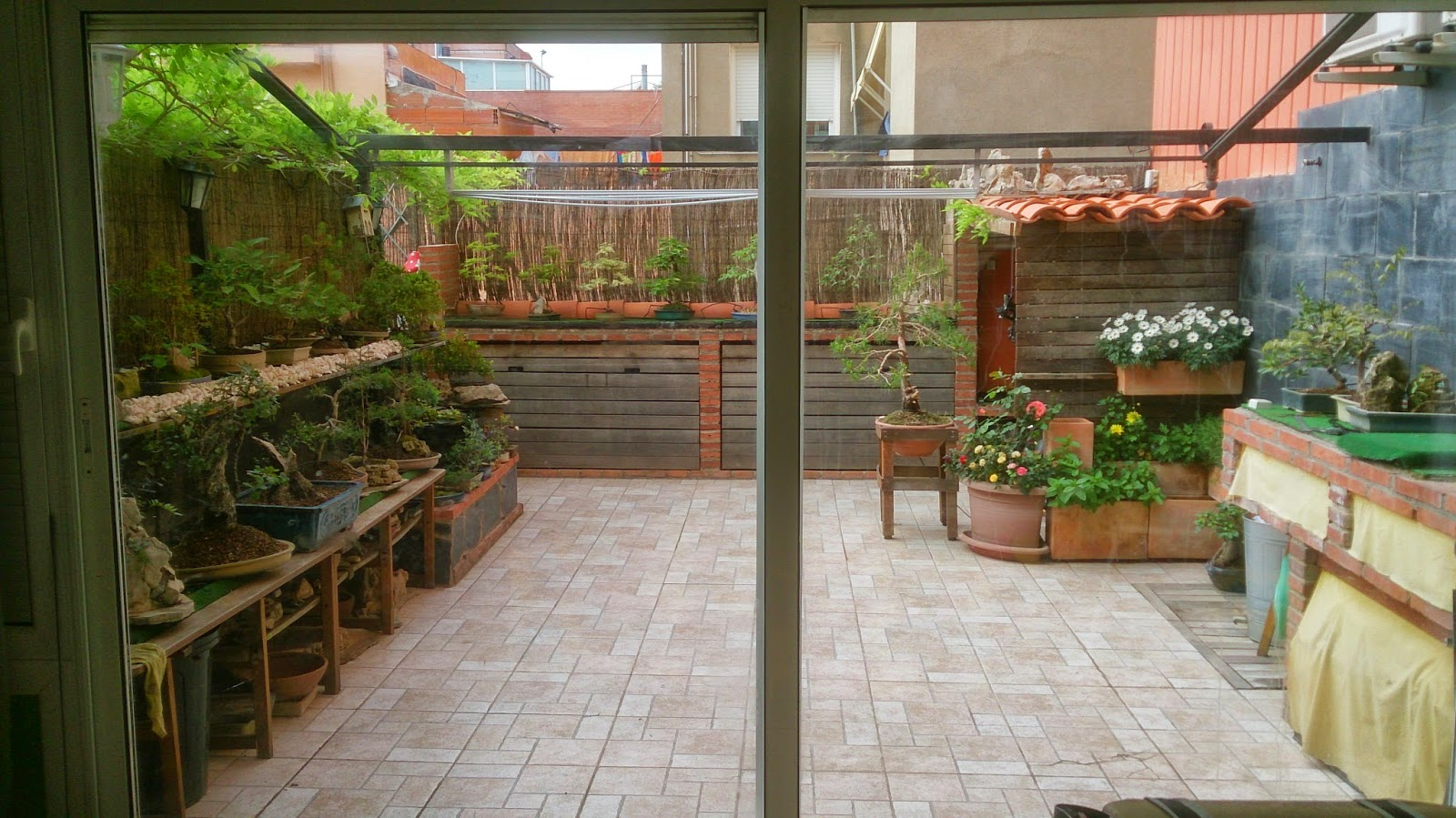 EXPRÉSION BONSÁI .....: Mi patio