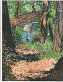 Logger Eddy Walking Through Forest