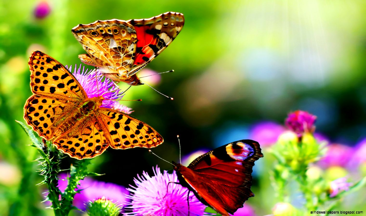 Beautiful Butterfly Images Hd Natural