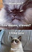 Labels: Grumpy Cat, Memes