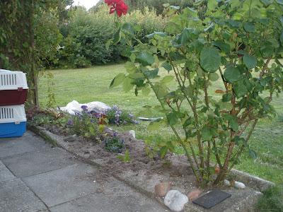Lones haveliv: juli 2011