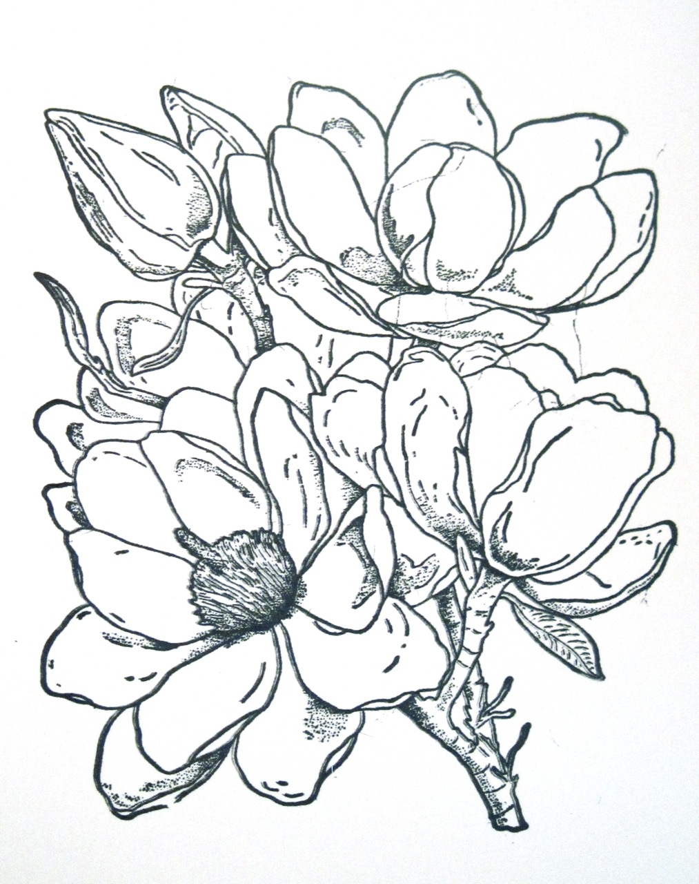 magnolia tree coloring pages - photo#12