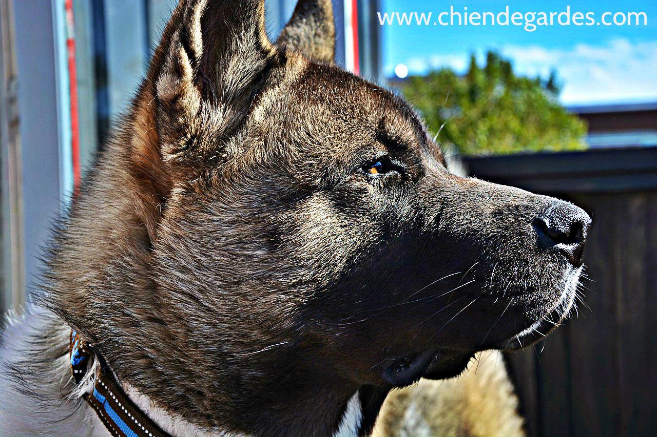 6 conseils qui peut rendre votre chien un chien de garde chien de garde. Black Bedroom Furniture Sets. Home Design Ideas