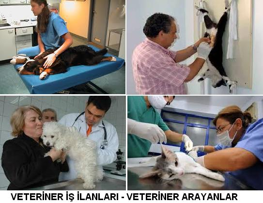 veteriner iş ilanları veterinerlik is ilanlari veteriner arayanlar