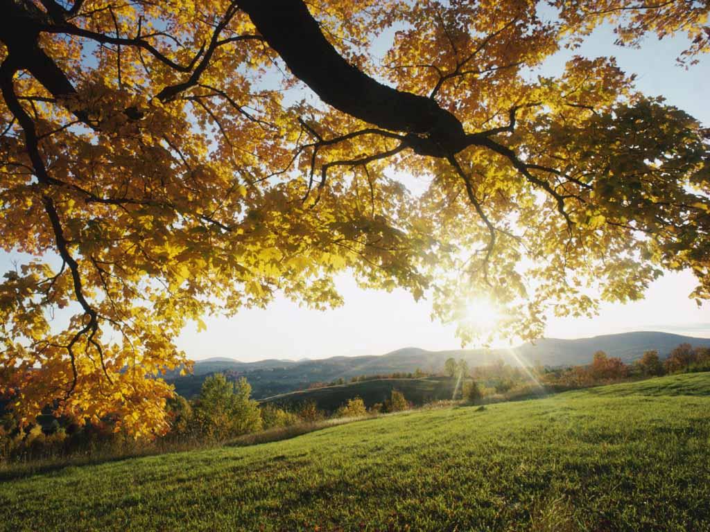 http://3.bp.blogspot.com/-k9V7hRchHAw/TWhaT2i1hII/AAAAAAAAAjE/Lewql2cs3k0/s1600/autumn-leaves.jpg