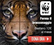 FERMA IL BRACCONAGGIO DELLA TIGRE