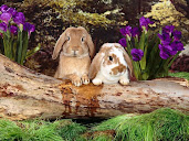 #1 Rabbit Wallpaper