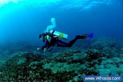 006+DSC 1233 2+ +Whooila.com Foto/Gambar Pemandangan Indah dibawah Laut Pulau Anambas
