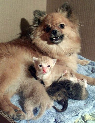 Anjing jaga anak kucing