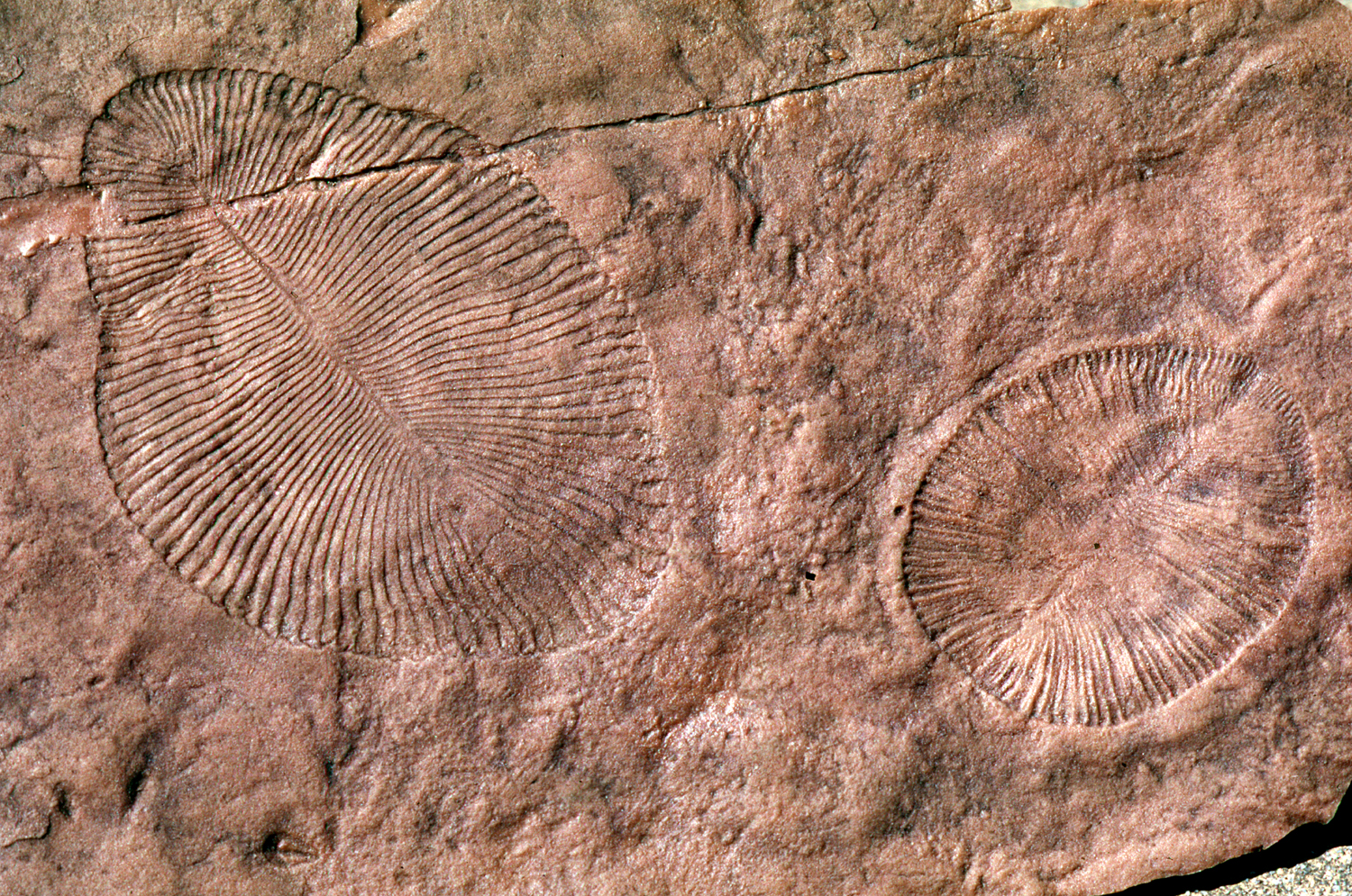 the science of dating rocks by using fossils is called biostratigraphy