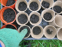 Growing Peas In Peat Pots