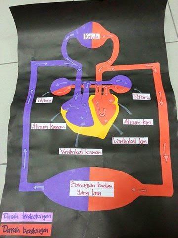 Idea P&P Sains : Gambarajah Sistem Peredaran Darah