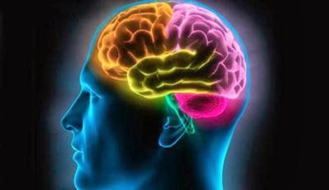 5 Tips Menjaga Otak Supaya Tetap Kuat Ingatan Sampai Tua