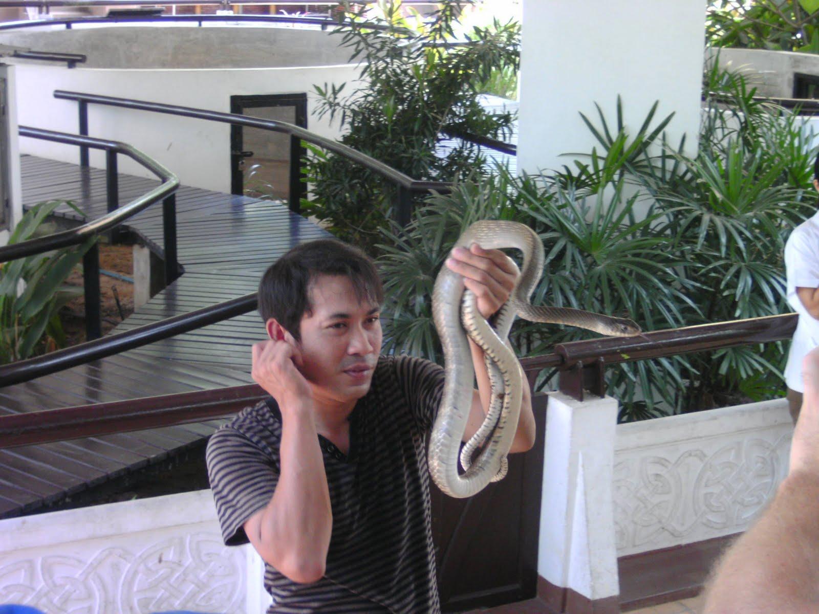 python slange opskrift
