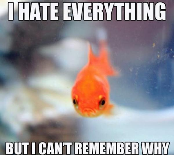 30 funny animal captions part 13 30 pics amazing for Funny fish pictures