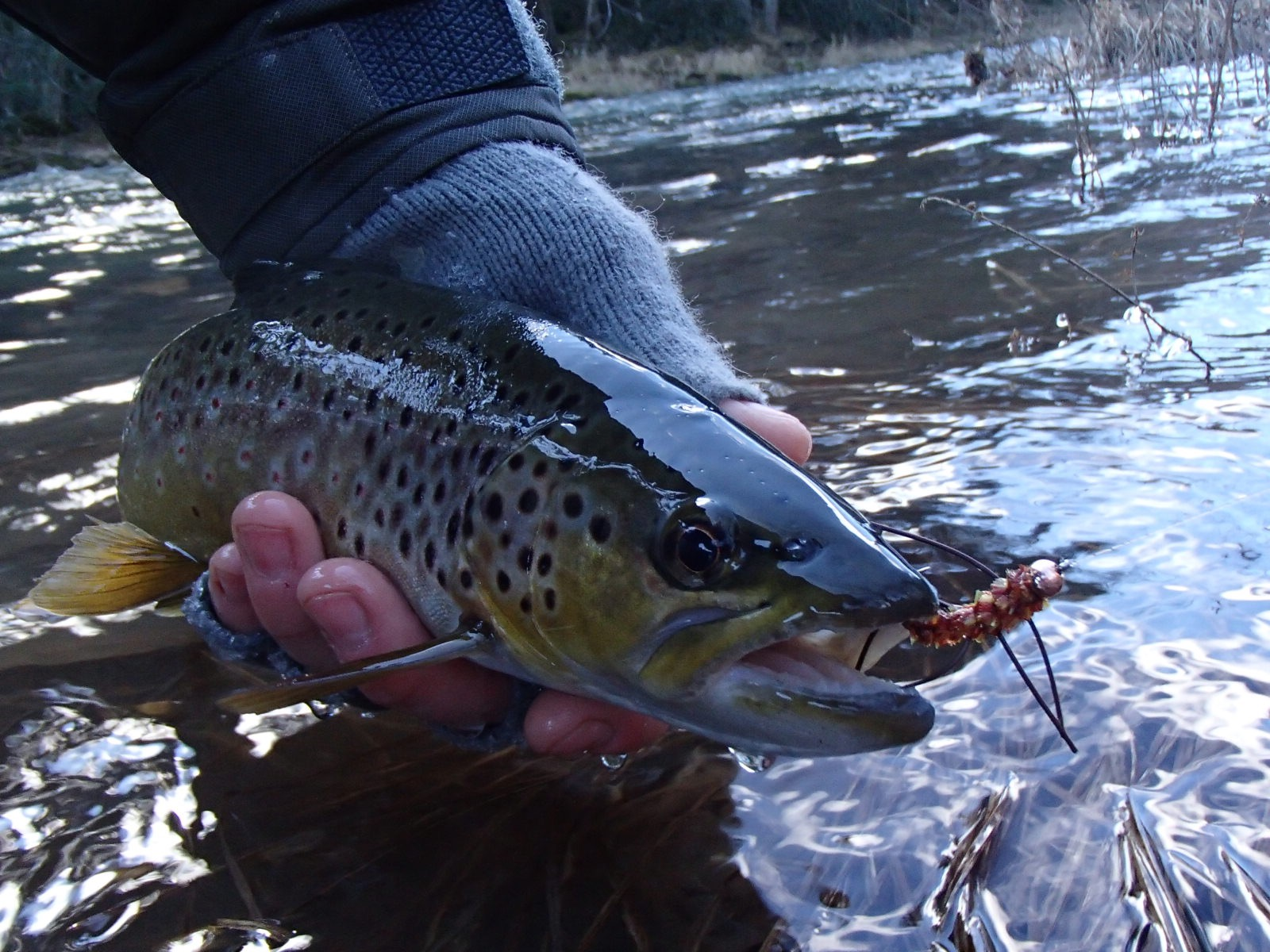All things fly fishing central pa trout for Fishing in pa