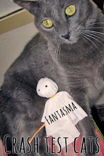 Rumbo Gato Gatera Fantasma Catnip