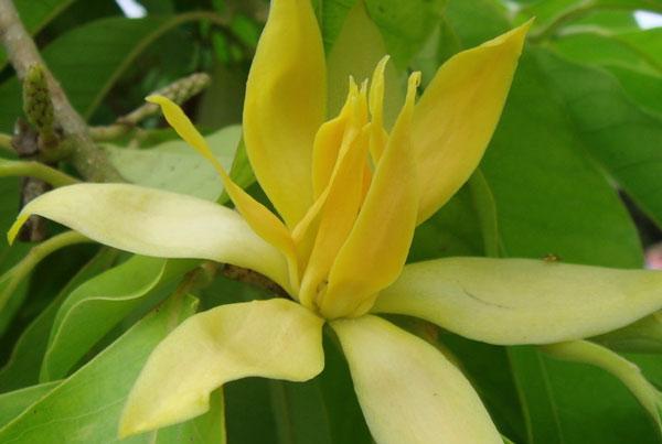 Morfologi tumbuhan berkarang melingkar cyclis jika daun daun kelopak benang benang sari dan daun daun buah masing masing tersusun dalam suatu lingkaran misalnya bunga ccuart Gallery