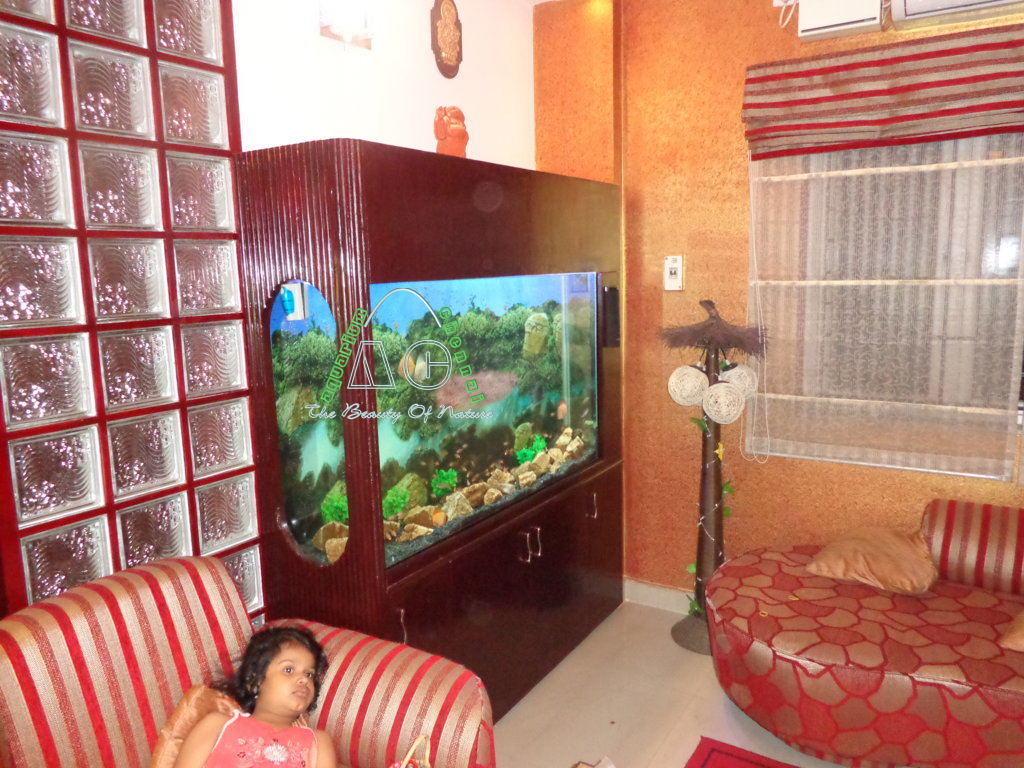 Aquarium fish tank in chennai - Discus Fish Aquarium