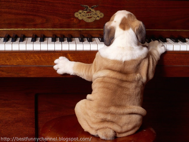 Funny musician dog.