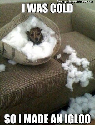 I Was Cold Funny Cute Dog Destroys