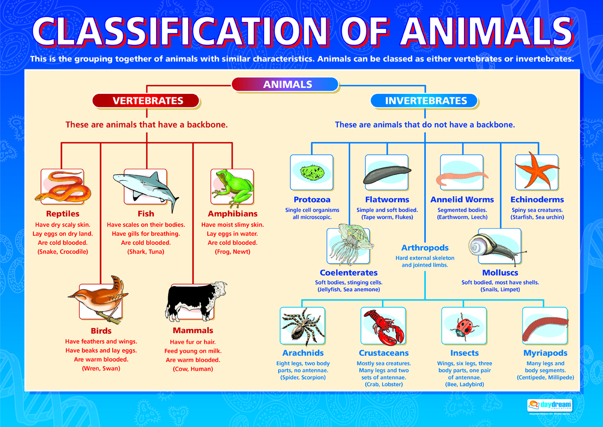 verterates Vertebrate animals can be either warm-blooded or cold-blooded a cold-blooded animal cannot maintain a constant body temperature the temperature of their body is determined by the outside surroundings.