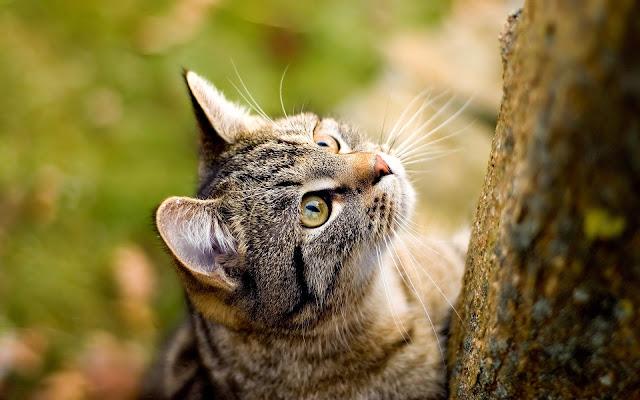 Hình nền mèo đẹp và dễ thương nhất