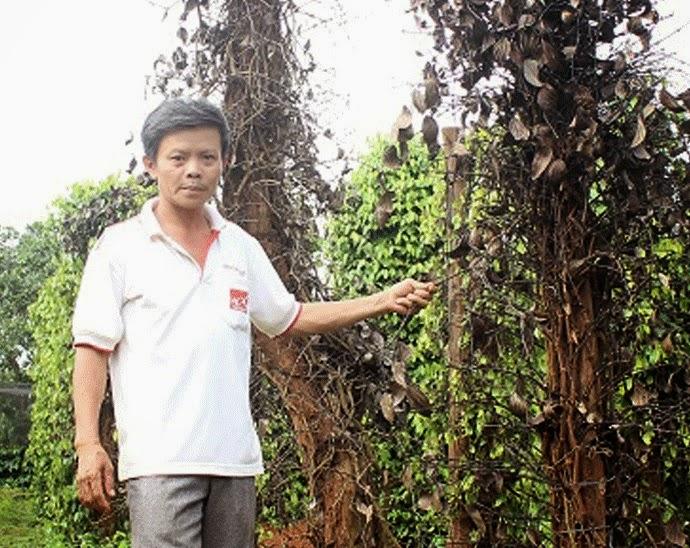 Gia Lai: Một số phân bón sinh học - Mối đe dọa cho cây trồng