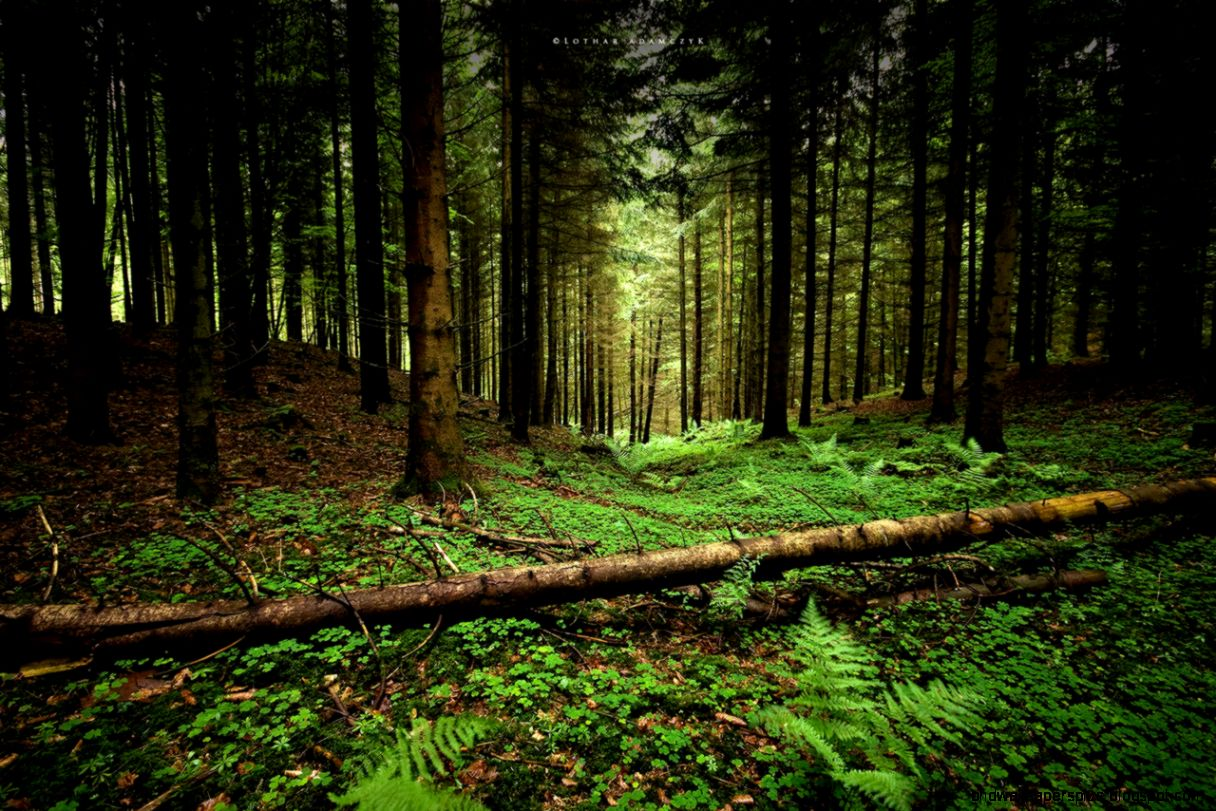 Forest Wallpaper Tumblr | HD Wallpapers Plus