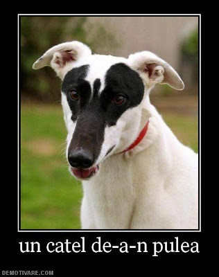 dog-photo