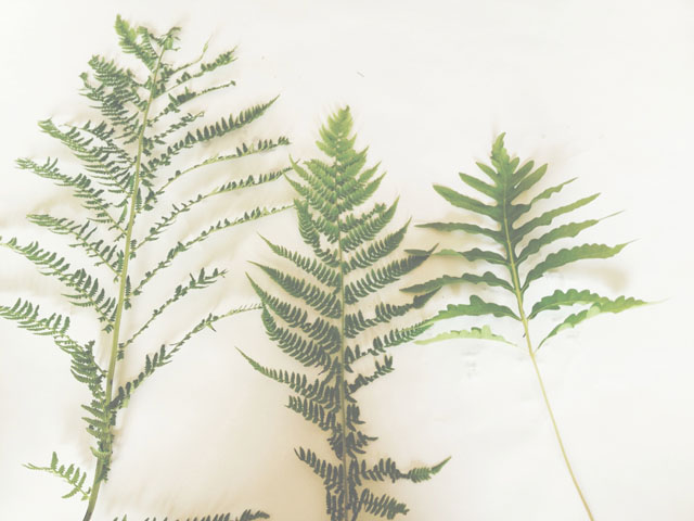 pressing ferns | Kate Uhry photography