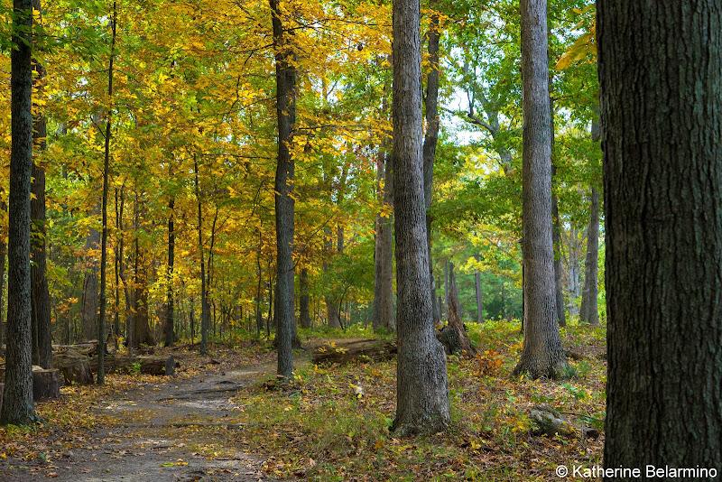 Unfinished Railroad Loop Trail Manassas National Battlefield Park Northern Virginia