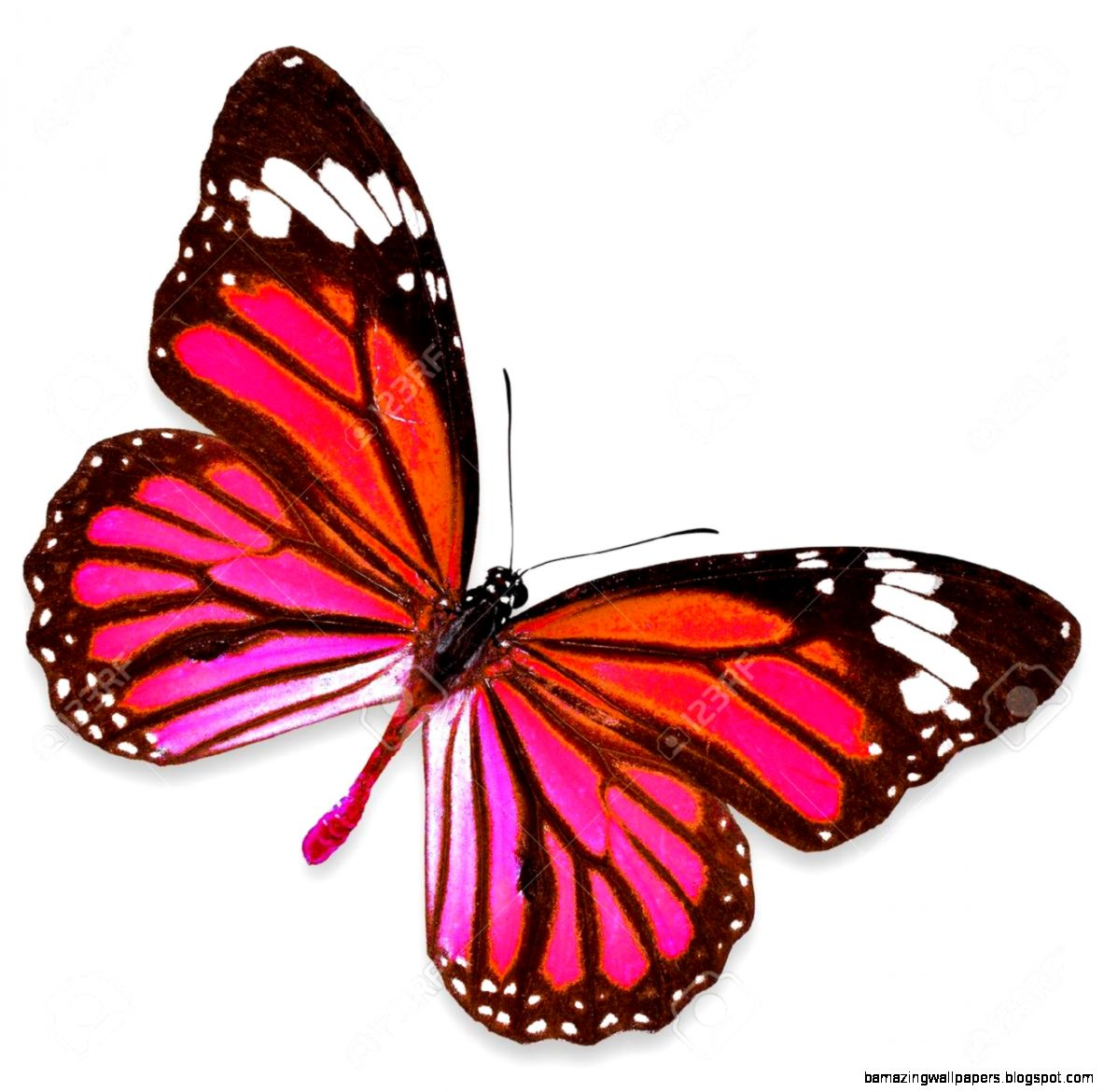 Pictures Of Pink Butterflies | Amazing Wallpapers