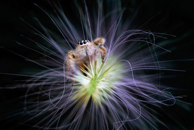 Nordin Seruyan, macro photography, photographs of tiny insects-2