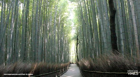 Bamboo Forest - Arashiyama