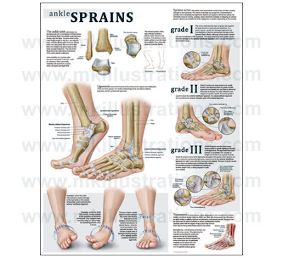Anatomy ankle sprain