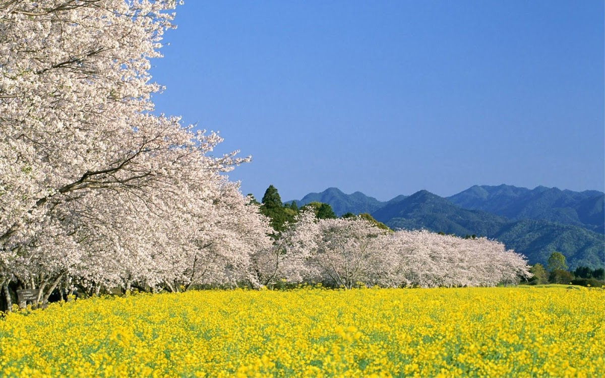 Japan Widescreen Wallpaper 11