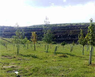 Repoblación forestal en mina a cielo abierto en Sotillos de Sabero (León)