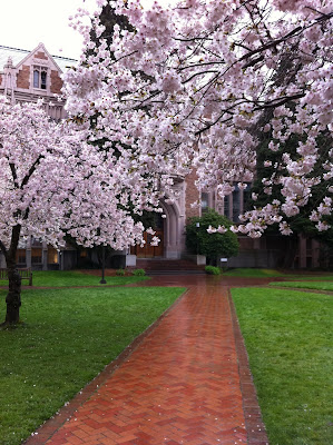 Flowering cherry trees in front of historical building