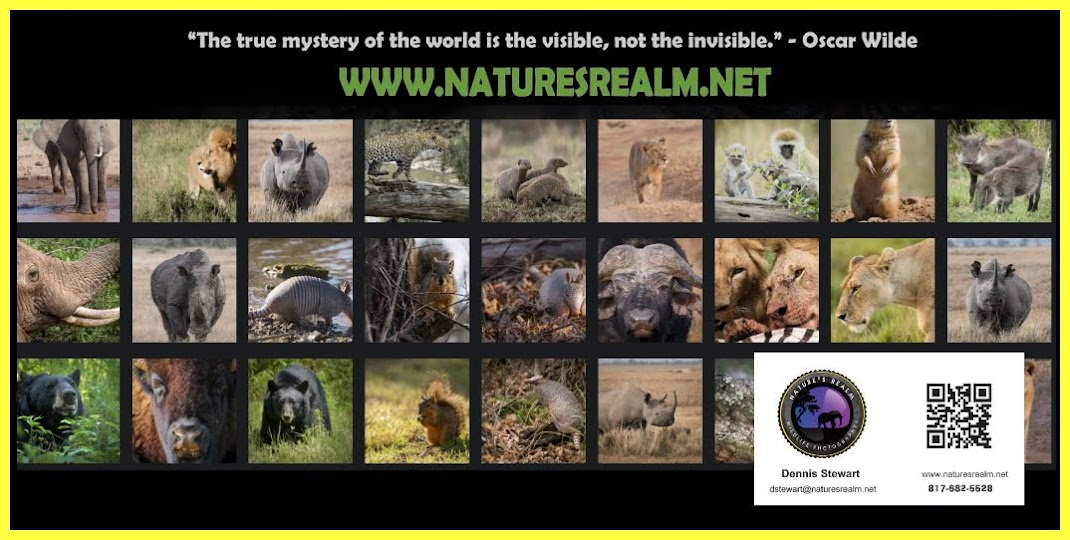 Nature's Realm Wildlife Photography