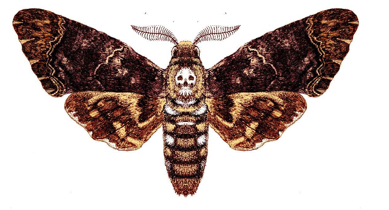 """the death of the moth The death of a moth summary essay virginia woolfe's essay """"the death of the moth,"""" entraps readers into the ongoing struggle of our own mortality."""