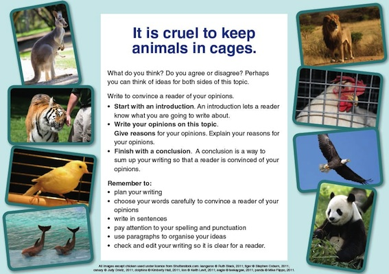 keeping animals in cages is cruel essay Persuasive essay 11-16-09  should animals be kept in zoos  in a cage, locked up when you are so innocent  keeping animals in zoos is one of cruelty.