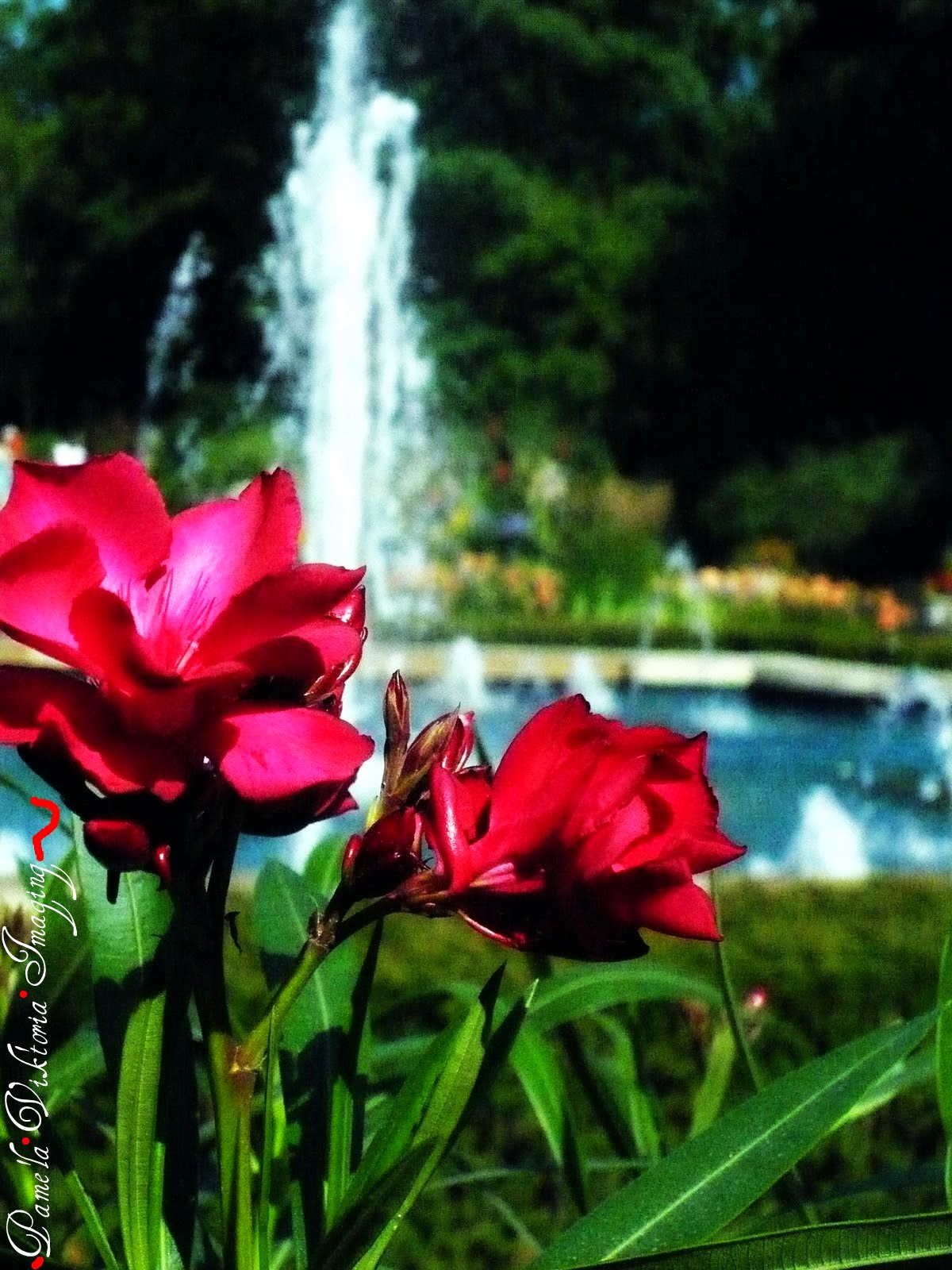 Red Flowers at Fountain