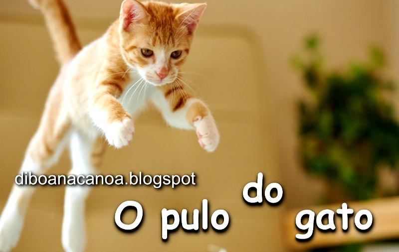 Imagens E Frases Engraçadas O Pulo Do Gato