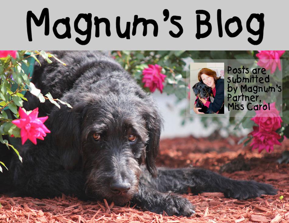 Magnum's Blog