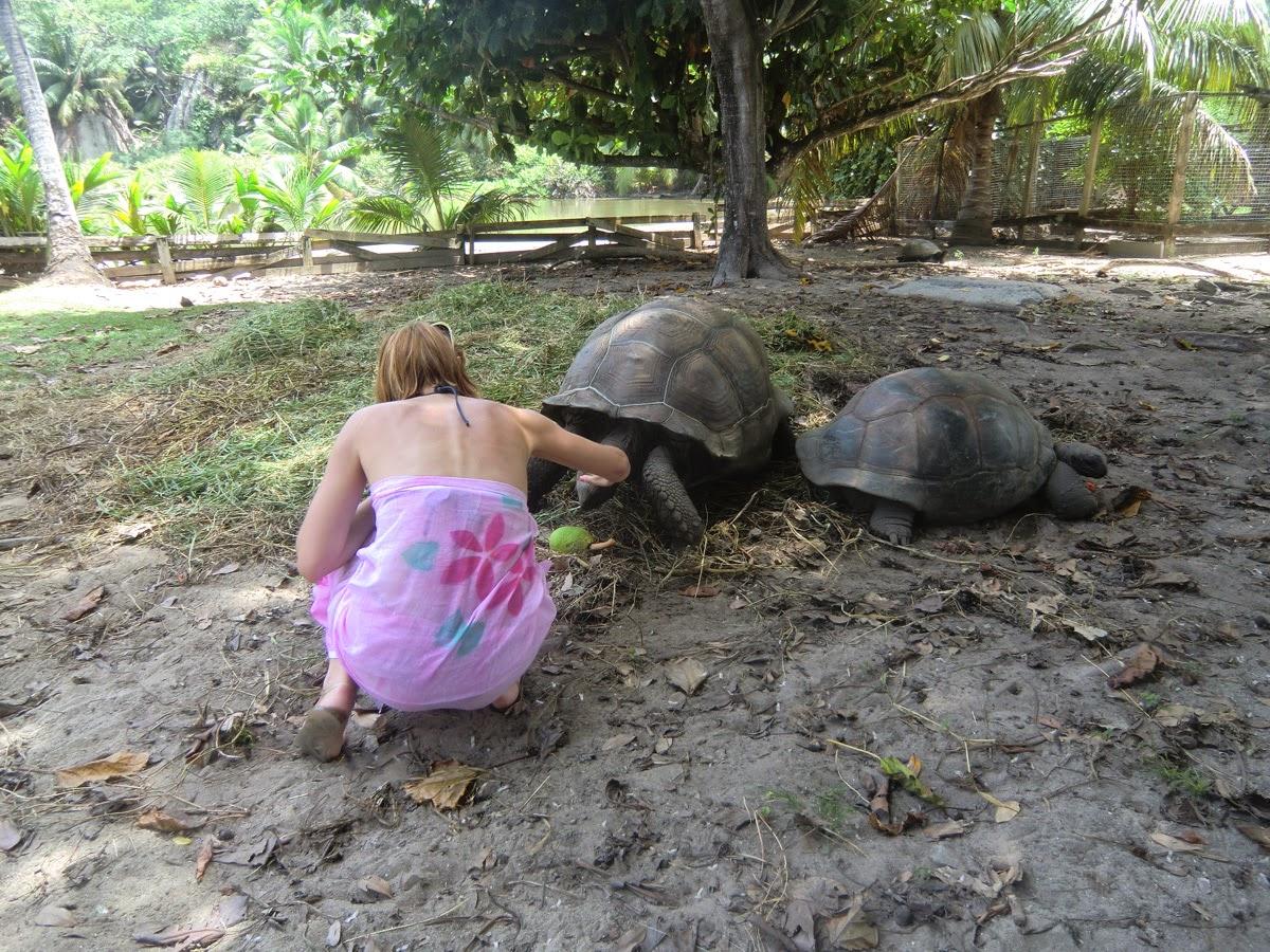 Черепахи-на-острове-Силуэт