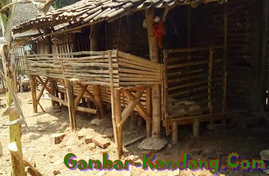 kandang domba sederhana dari bambu