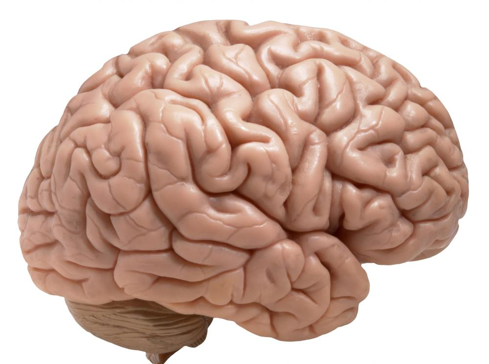 questions for model brain
