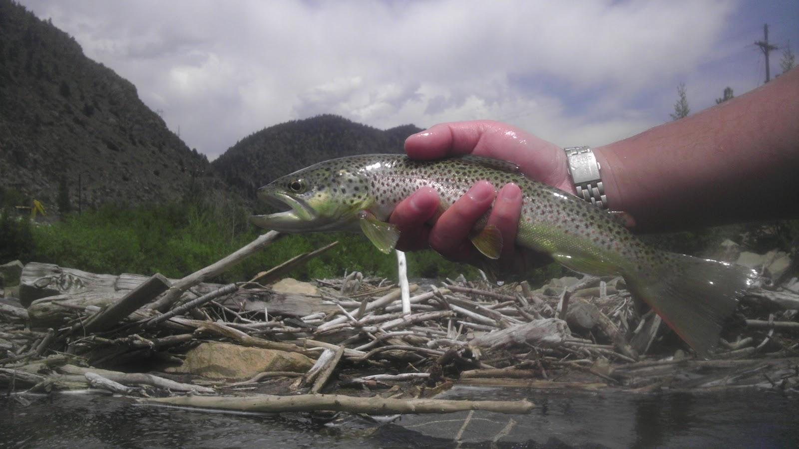 Colorado fly fishing 06 14 12 clear creek below georgetown for Clear creek fishing