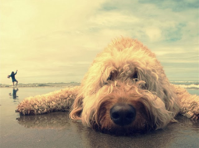 Cute dogs - part 7 (50 pics), dog in the beach
